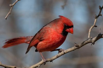 0812_Cardinals30_004