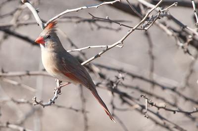 0812_Cardinals30_012