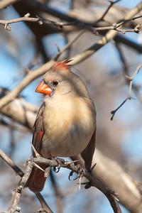 0812_Cardinals30_019