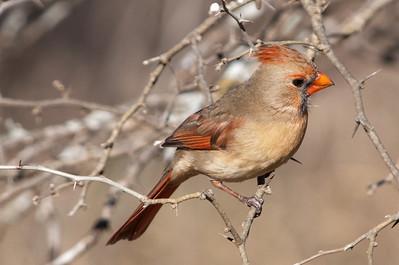 0812_Cardinals30_030