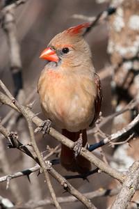 0812_Cardinals30_022