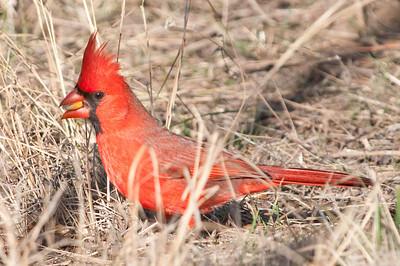 0812_Cardinals30_032