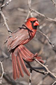 0812_Cardinals30_023