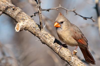 0812_Cardinals30_026