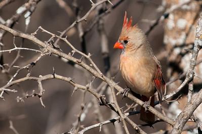 0812_Cardinals30_025