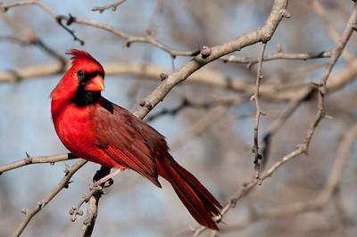 0812_Cardinals30_014