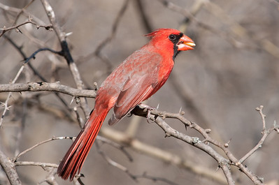 0812_Cardinals30_002