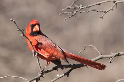 0812_Cardinals30_008