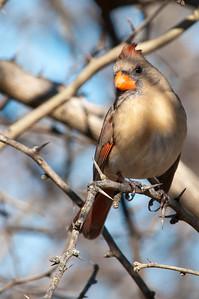 0812_Cardinals30_017