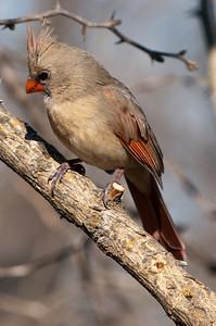 0812_Cardinals30_027