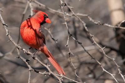 0812_Cardinals30_021