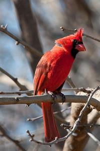 0812_Cardinals30_010