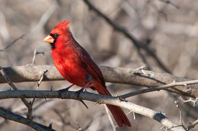 0901_Cardinals_044