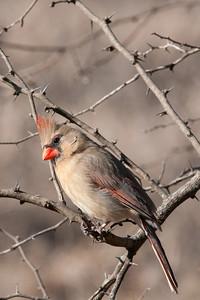0901_Cardinals_021