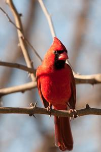 0901_Cardinals_039
