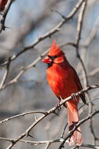 0901_Cardinals_038