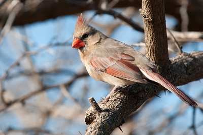 0901_Cardinals_043