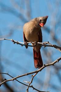 0901_Cardinals_029
