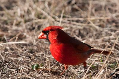 0901_Cardinals_046