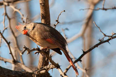 0901_Cardinals_036