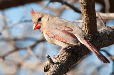 0901_Cardinals_042