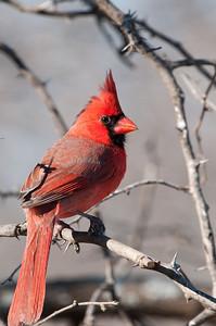 0901_Cardinals_045