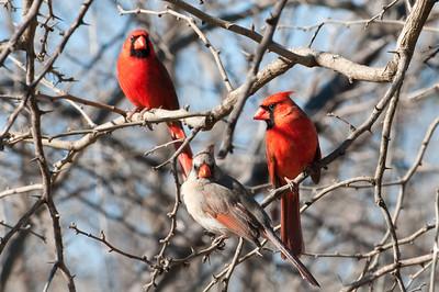 0901_Cardinals_027