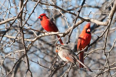 0901_Cardinals_026