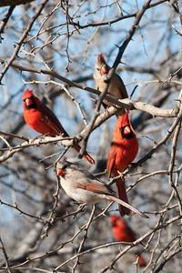 0901_Cardinals_024