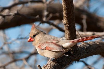 0901_Cardinals_041