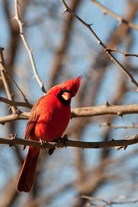 0901_Cardinals_034