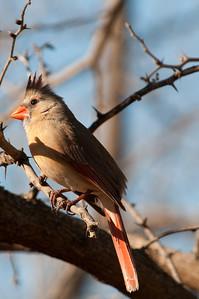 0901_Cardinals_035