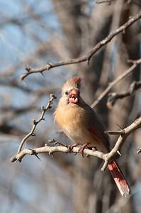 0901_Cardinals_018