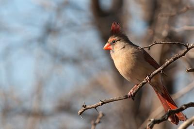 0901_Cardinals_040