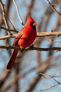 0901_Cardinals_033