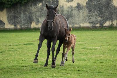 Mum & Foal 260319 Home