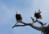 Crosswater Eagles