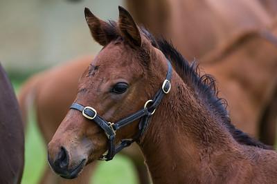 Foal 170517 Home