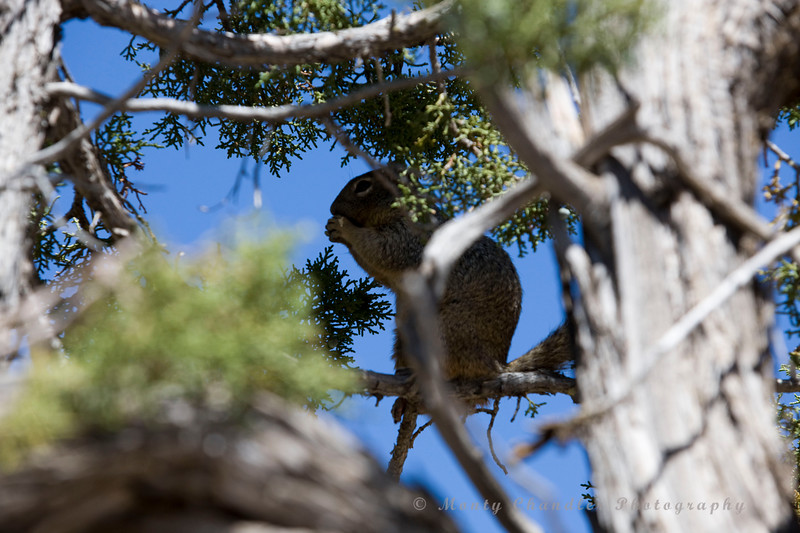 A squirrel grabs a bite on the South Rim