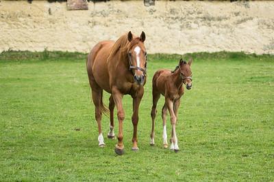 Mum & Foal b 280319 Home