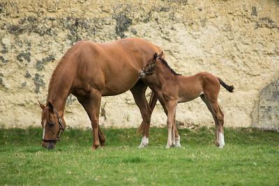 Mum & Foal 280319 Home