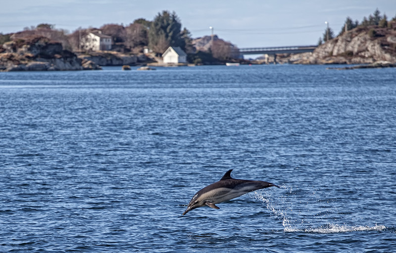 IMAGE: http://allweather.smugmug.com/Other/Wildlife/i-gHrtxRr/0/L/IMG_1572-Edit-L.jpg