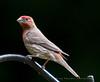 Birds of North Carolina - my back yard