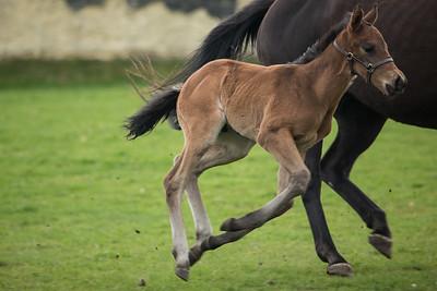 Foal 260319