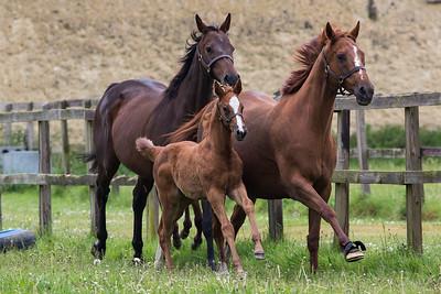 Horses A 170517 Home