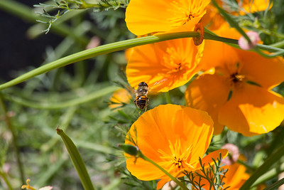 Flying Bee 020717