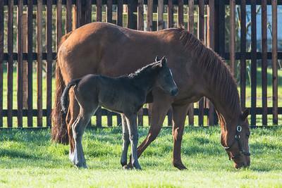 Foal 160216