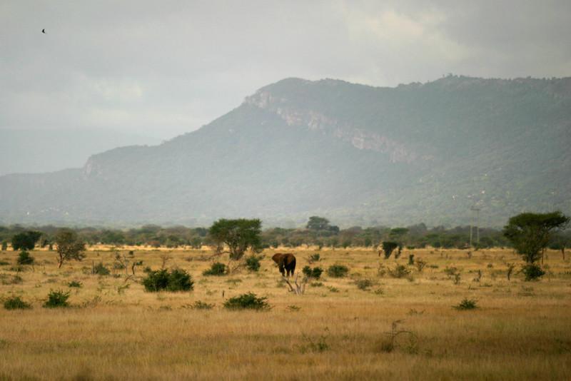 Lone Bull Elephant<br /> Tsavo West National Park, Kenya