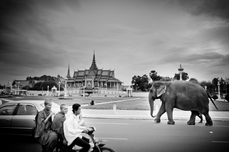 An elephant walks down a busy street in Phnom Penh, Cambodia