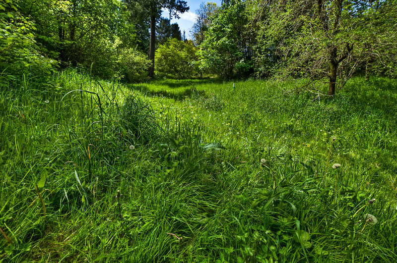 Forest Park - near Fairview Ave